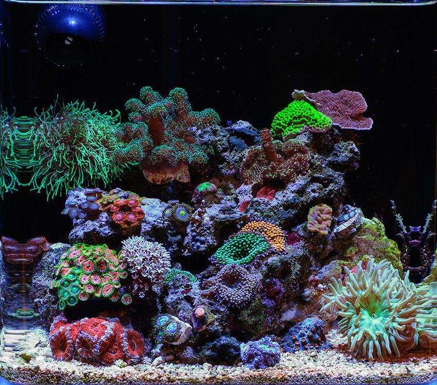 Sweet nano for Nano saltwater fish