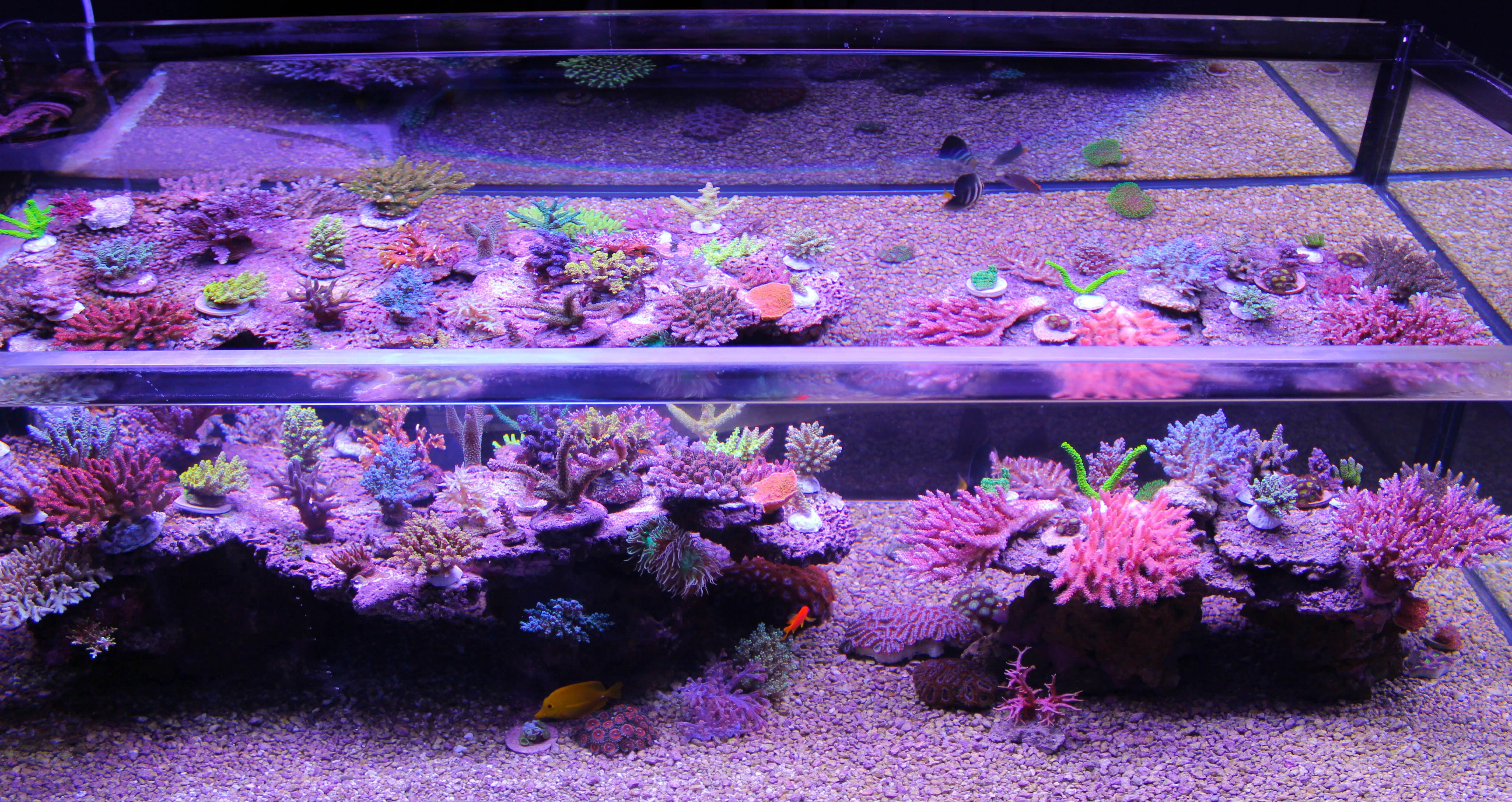 Freshwater fish tank alkalinity - Img_5623