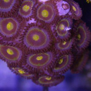 Honeycomb wysiwyg