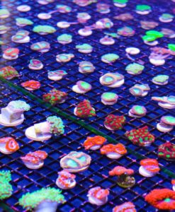 All Corals
