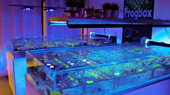 ordering corals online