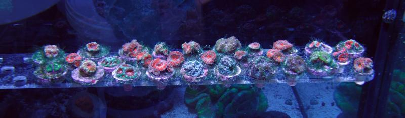 reef tank frag rack