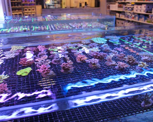 salt water aquariums canada