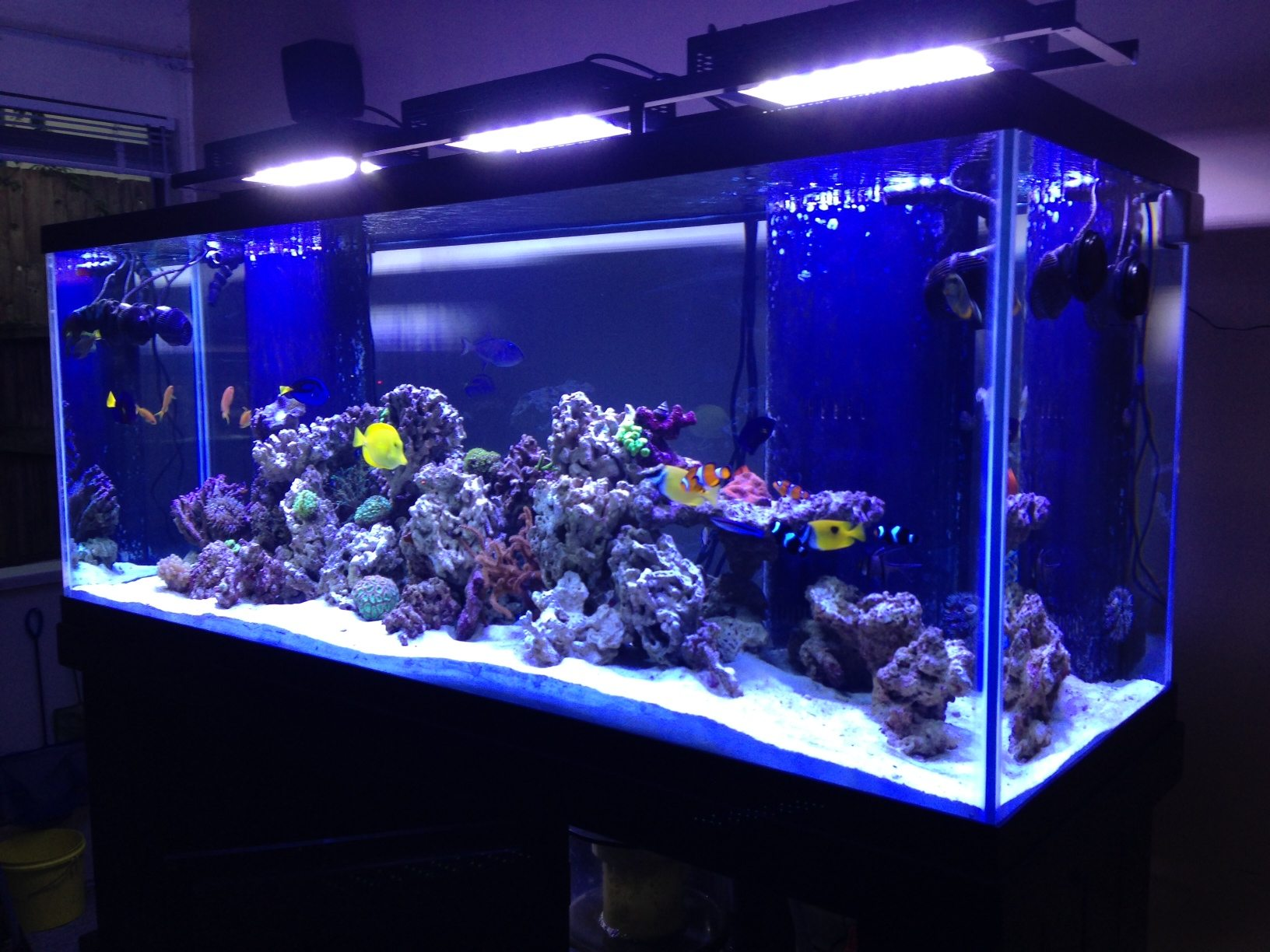 Featured Tank 210 Gallon Master Piece
