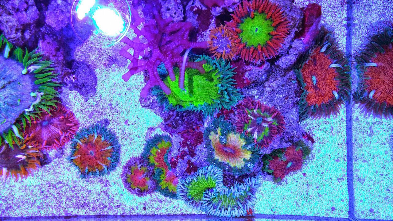 Rock Flower Anemone Collection