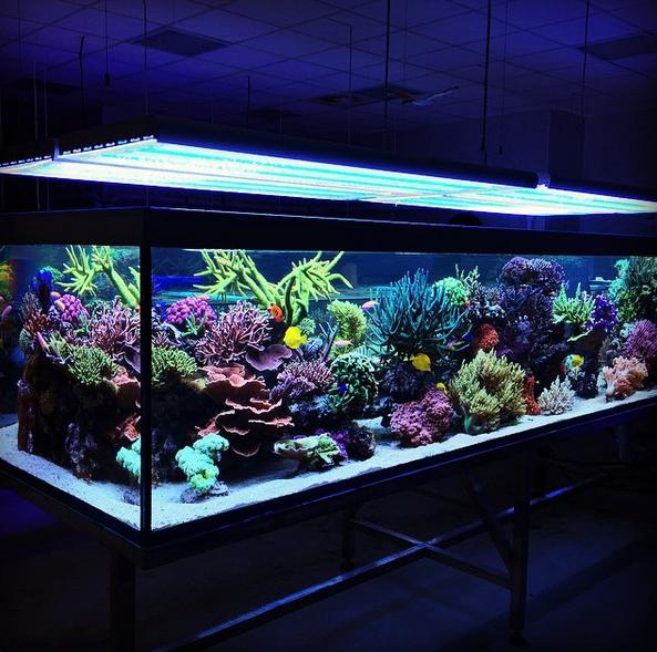 epic italian reef tank