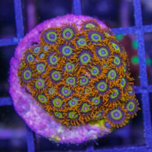 Fruit Loops Zoas