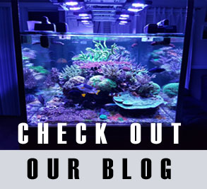 Best Aquarium Doser - Which doser should I buy for my