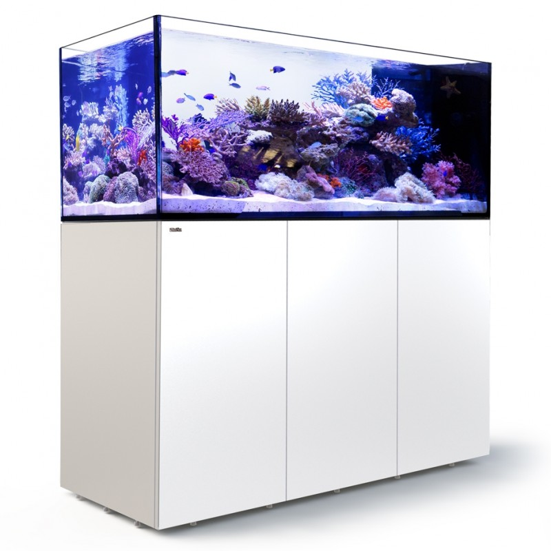 red sea reefer 500 peninsula available at fragbox corals in toronto