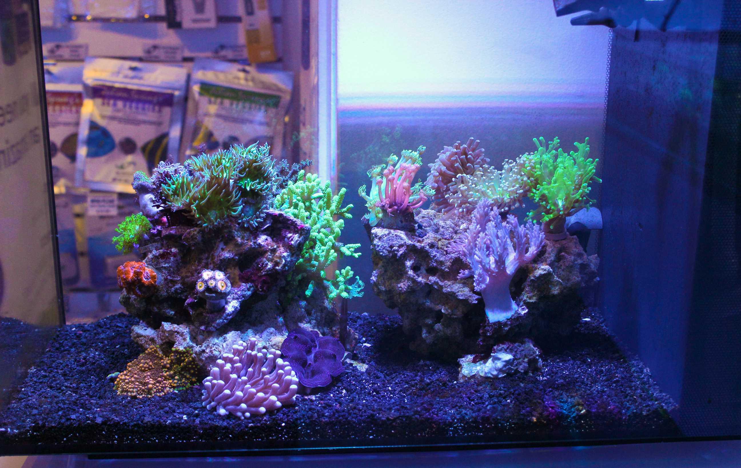 Fluval evo reef tank