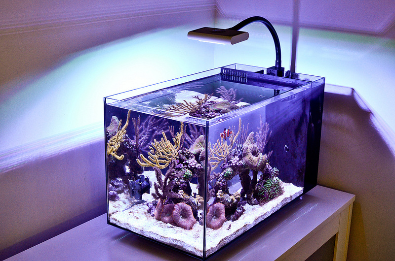 fluva evo reef ready aquarium