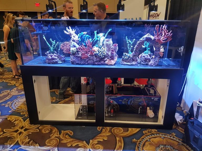 neptune display macna 2018